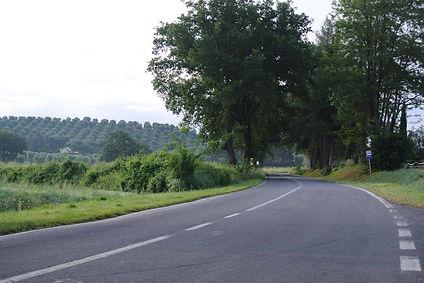 כביש בנוף ירוק וגפנים