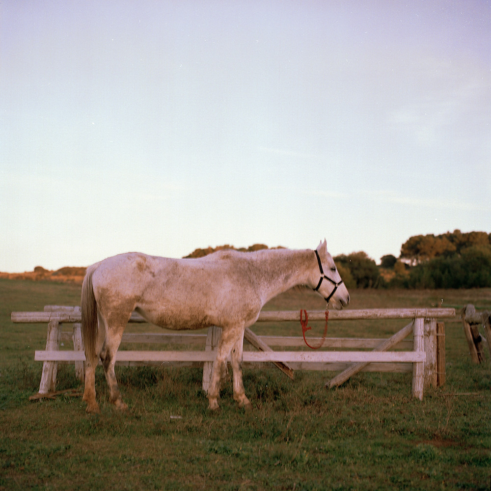 Italian photographer Cristina de Paola's shoot of a white horse