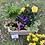 Thumbnail: Mixed planted arrangment