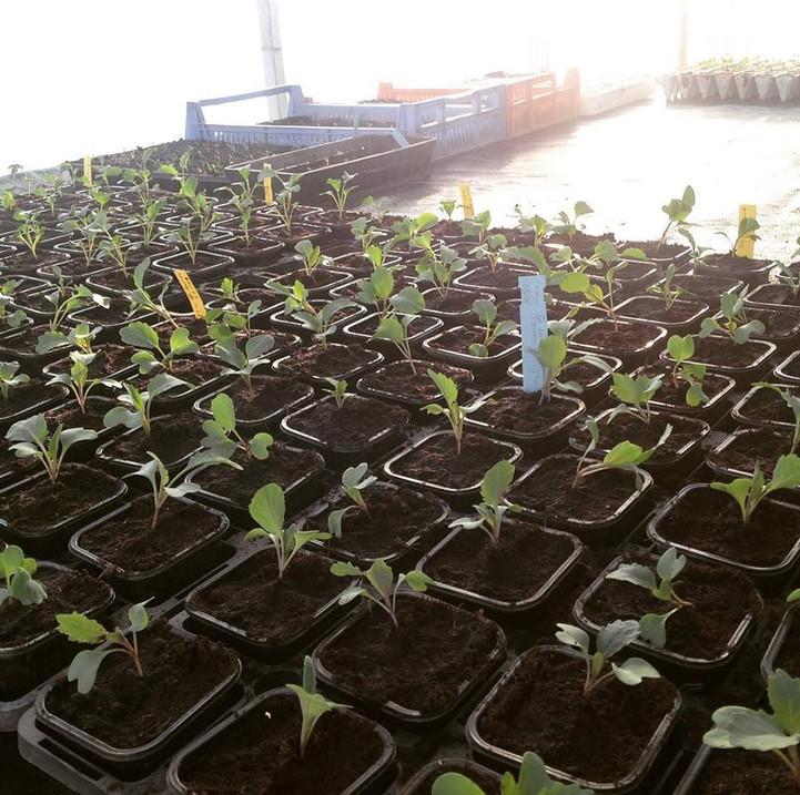 Plants dans notre serre à semis