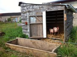 Soin aux animaux de la ferme