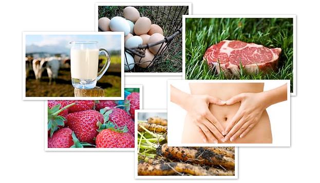 GAPS, nutrition, foundations of wellness