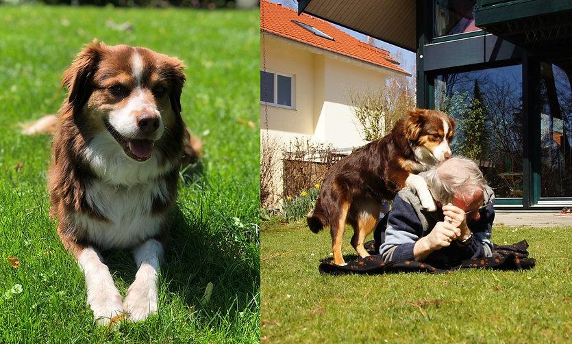 Hundecoaching - weg mit der Angst vor Vierbeinern