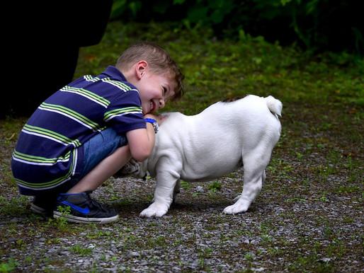 Keine Angst vor Hunden - Teil 2