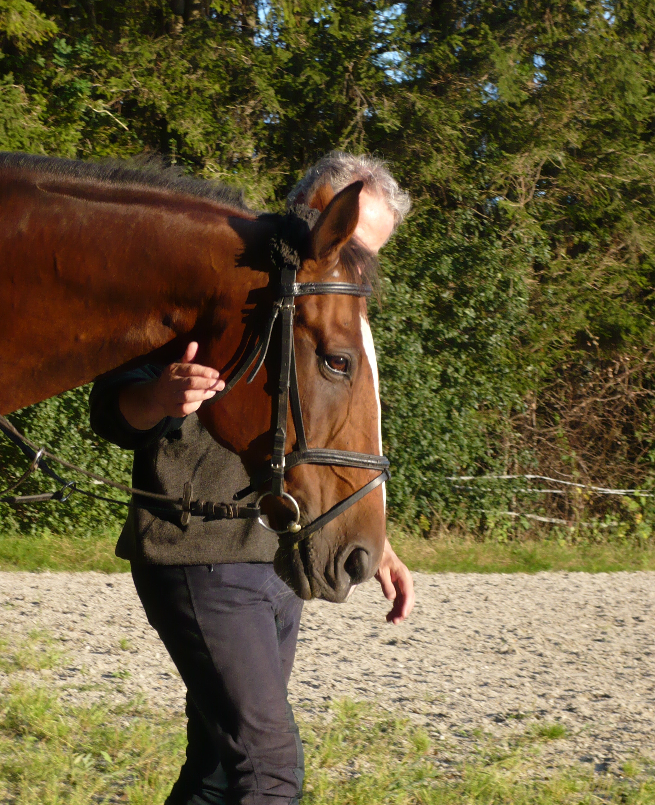 Management-training am Pferd