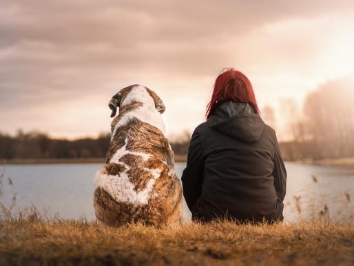 11 Tipps für den richtigen Umgang mit dem Hund