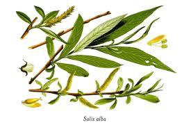 Ingredient Insider: Salicylic Acid