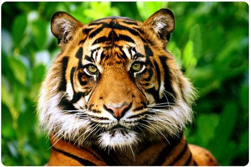 03-687-920 Холст с красками 22х30см.Взгляд грозного тигра