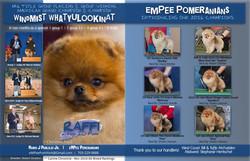 Pomeranian Review