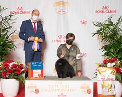 Cy BOB 2020 AKC National Dog Show