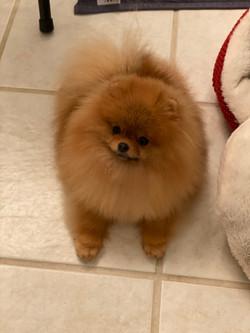 Winnie floor