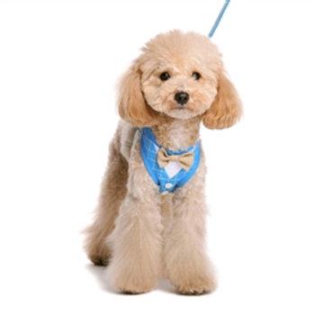 easygo bowtie dog harness