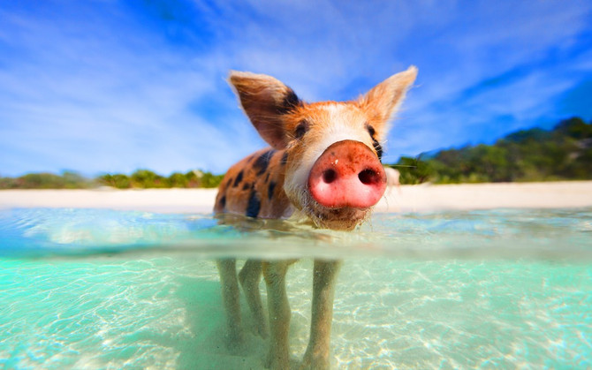 What Unique Things Can You Do in the Bahamas? We'll Show You