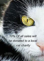 Cat%20Charity_edited.jpg