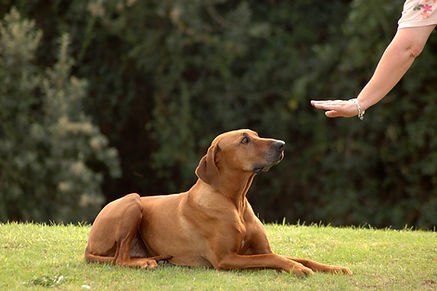 League City Dog Training