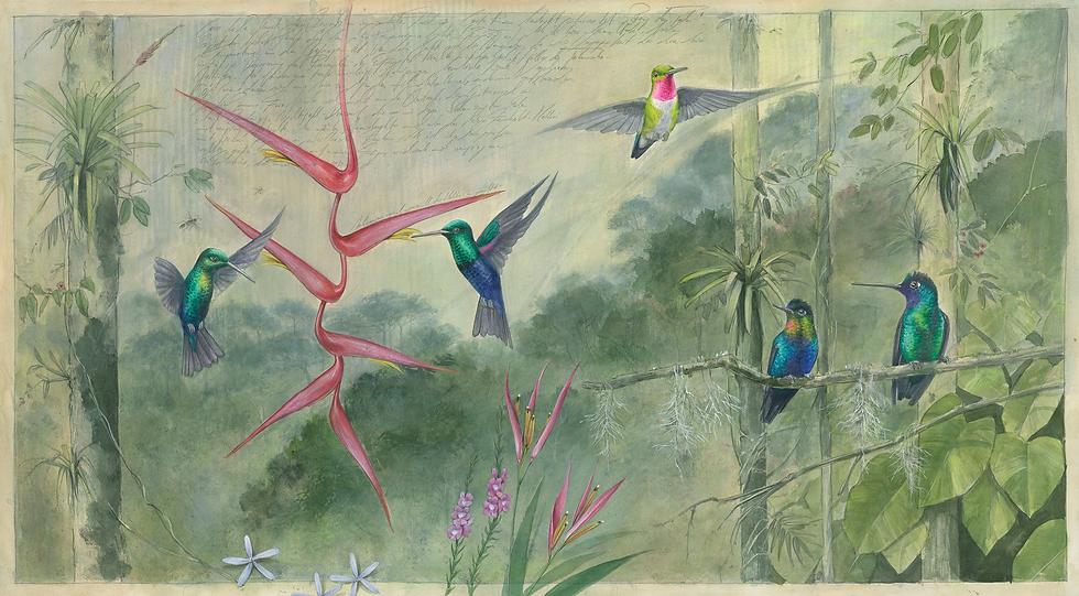Hummingbird_2.png
