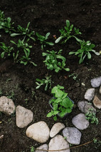 salads and herbs