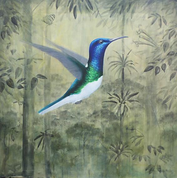 Jakobiner Kolibri
