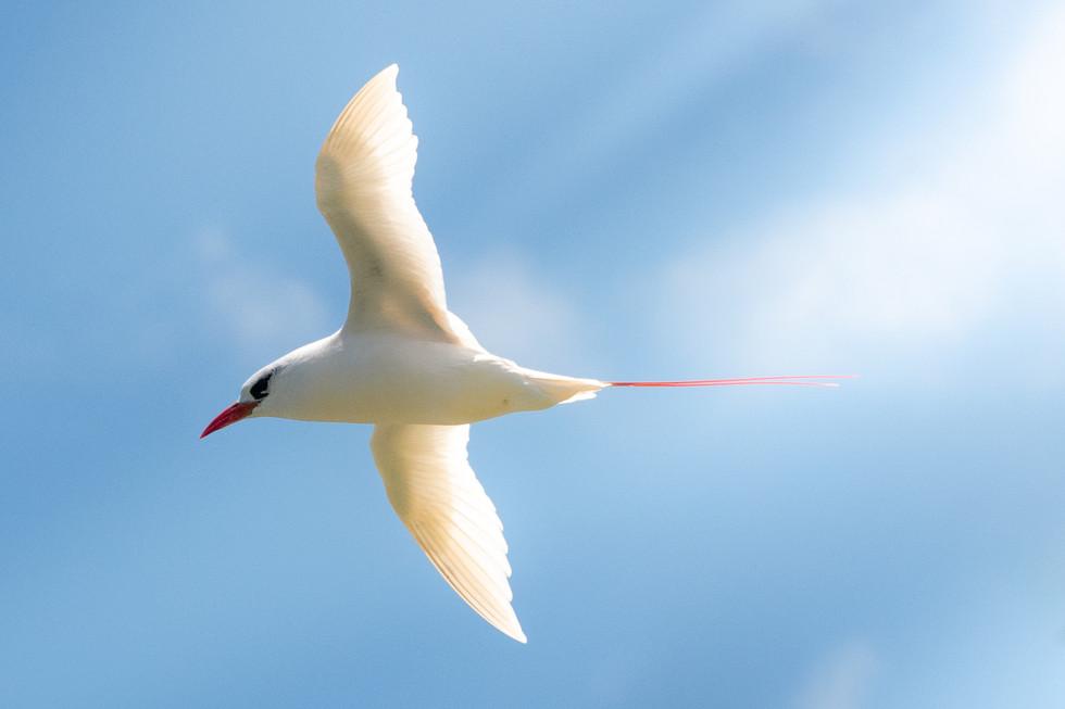 Kauai, Hawaii - birds, chickens and more