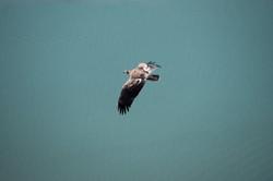Photograph Eagle