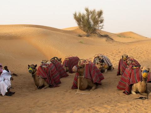DUBAI - Desert and Camel Safari