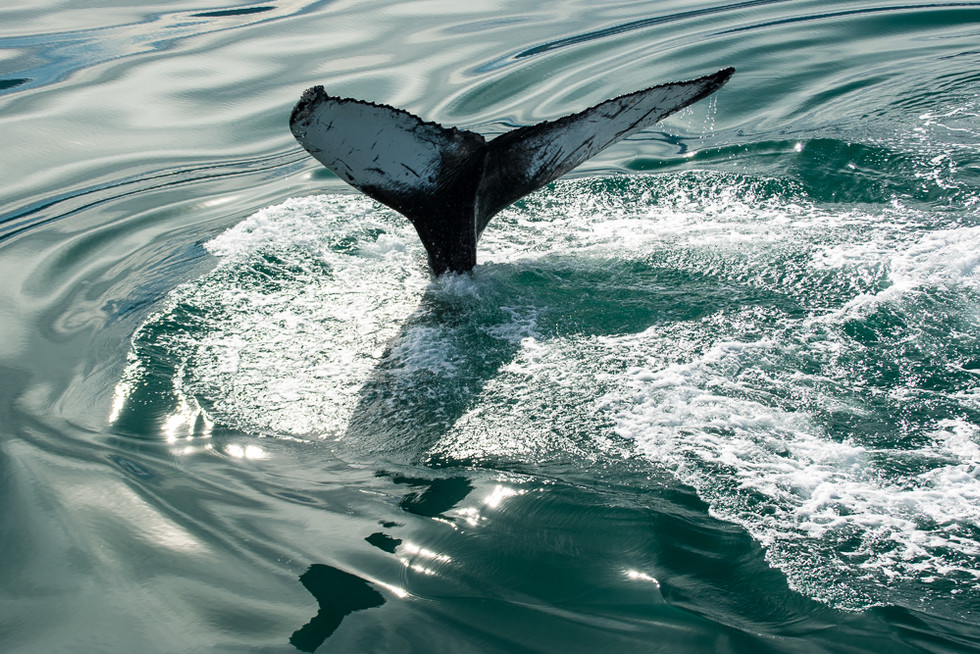 ICELAND - Icelandic Whales
