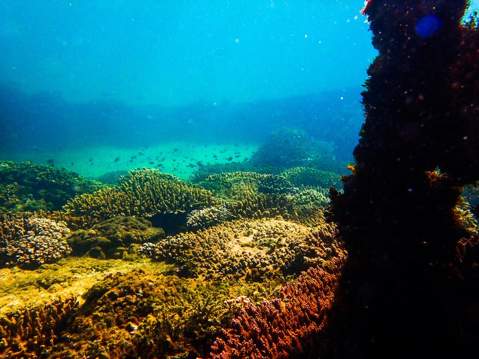 The Wrecks, Tangalooma