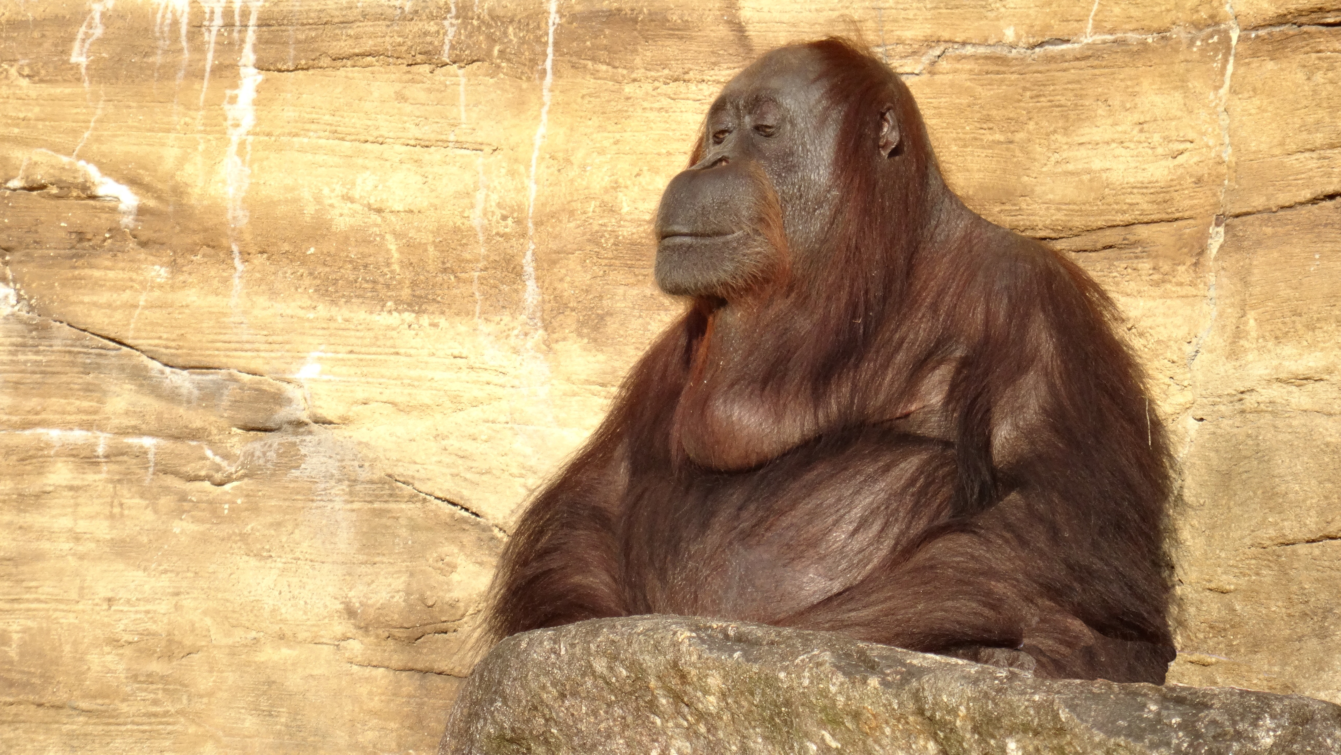 monkey_photo