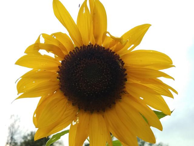 Sunflowers say...