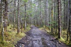 Photograph Juneau