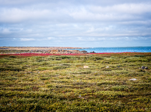 Churchill, Manitoba - Coastal Tour