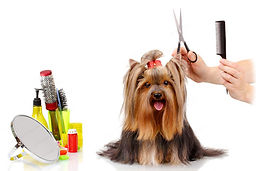 Groom-Your-Dog-at-Home-and-Save-On-Profe