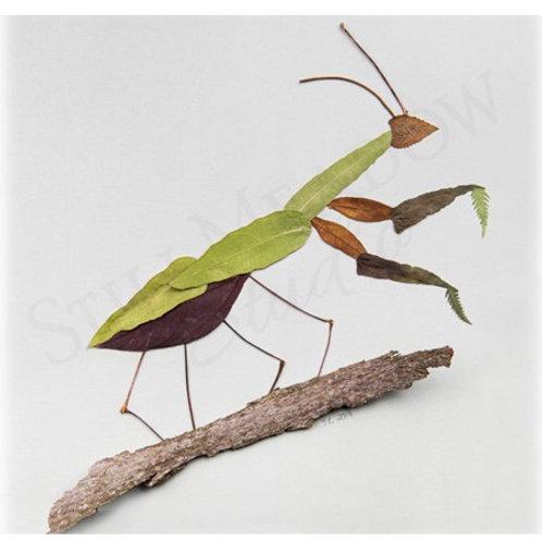 """Mantis"" Print"
