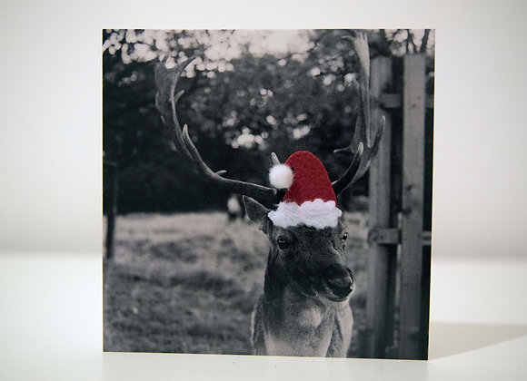 Christmas Card - Fallow Deer - Santa Hat