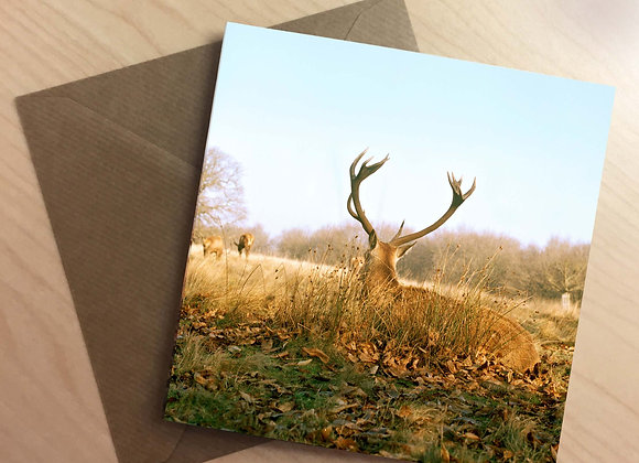 Greetings Card -Autumnal Red Deer