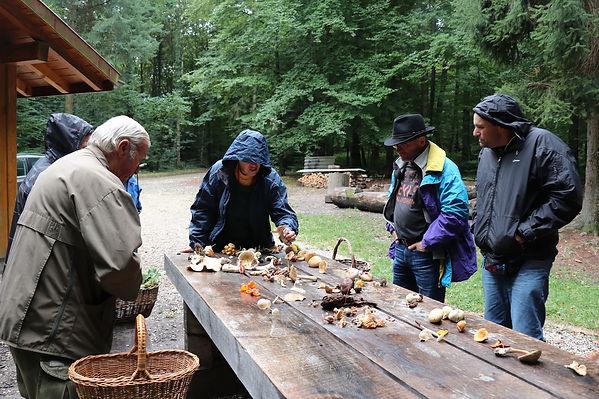 Petite table de détermination de champignons