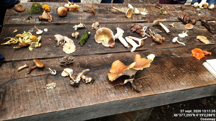 Découverte champignons