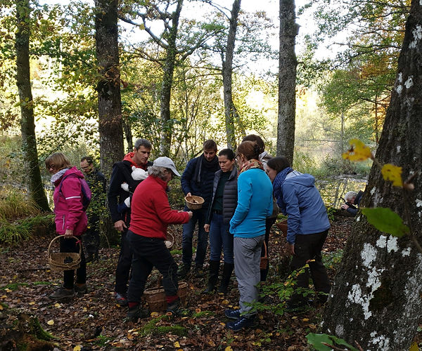 Groupe avec guide à la cueilltte des champignons