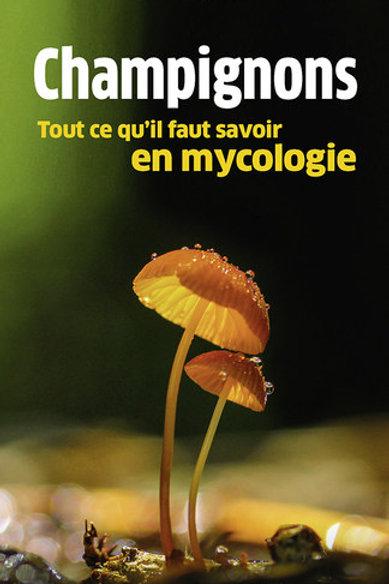 Champignons, tout ce qu'il faut savoir en mycologique