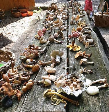 Belles trouvailles de champignons