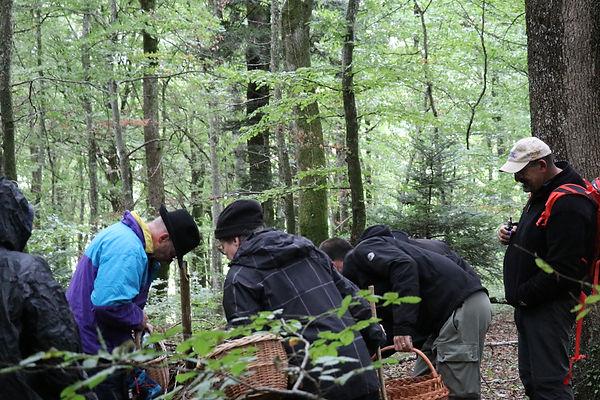 Aurait-on trouvé des champignons ?