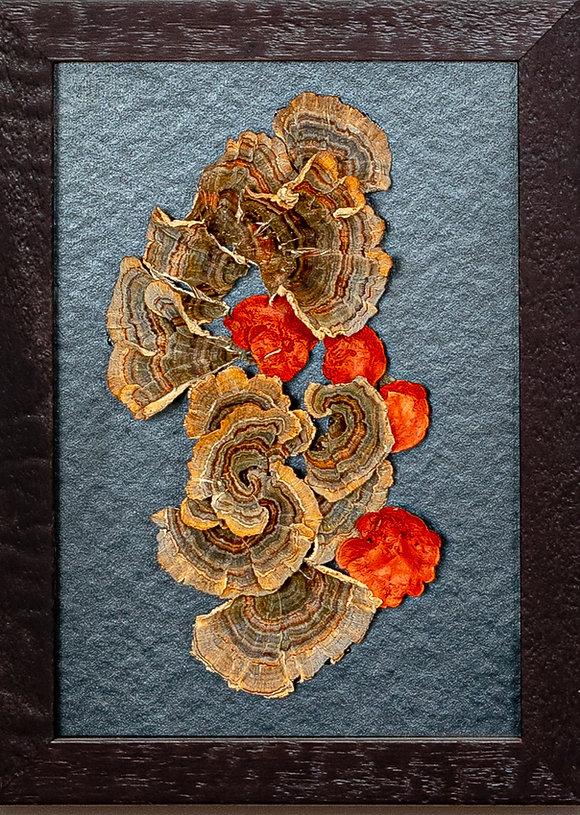 Dried Mushroom Art, Alex Uribe