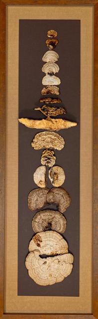 Mushroom Preservation