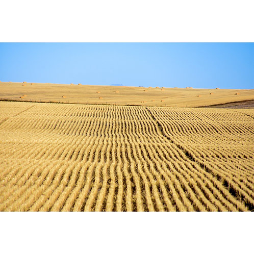 Montana Plains