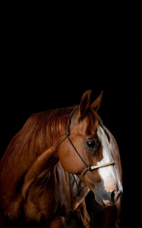 Studio Ponies.jpg