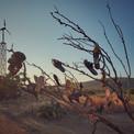 Terlik Ağacı, Ayvalık/Balıkesir