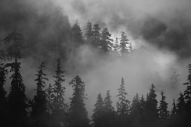 Foggy Forest