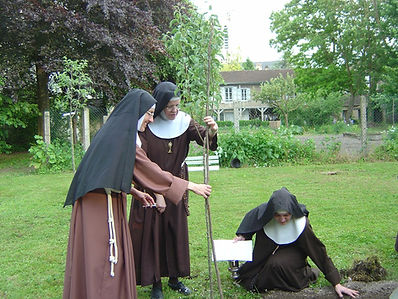un poirier greffé d'un arbre planté par Ste Claire d'Assise Clarisses de Troyes