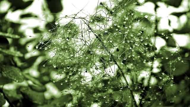 plant, rain, nature