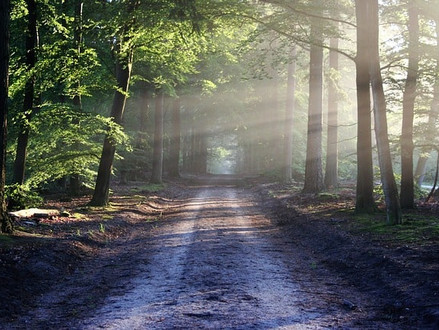 Sylvotherapy: Forest Bathing or the ultimate natural remedy against anxiety
